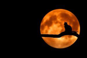 halloween-branch-cat