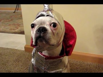 Funny Dogs Wearing Costumes Compilation 2013