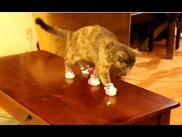 """Cats Wearing Socks Compilation"" 